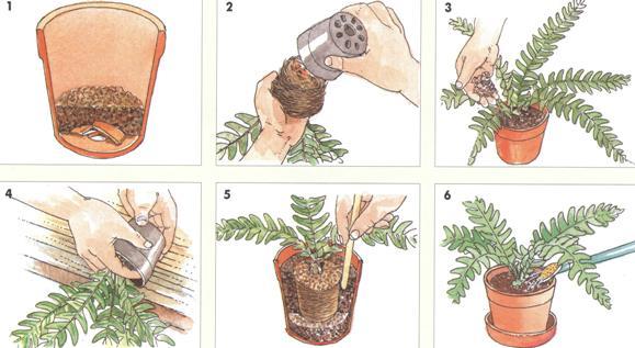 лунный календарь пересадки комнатных растений
