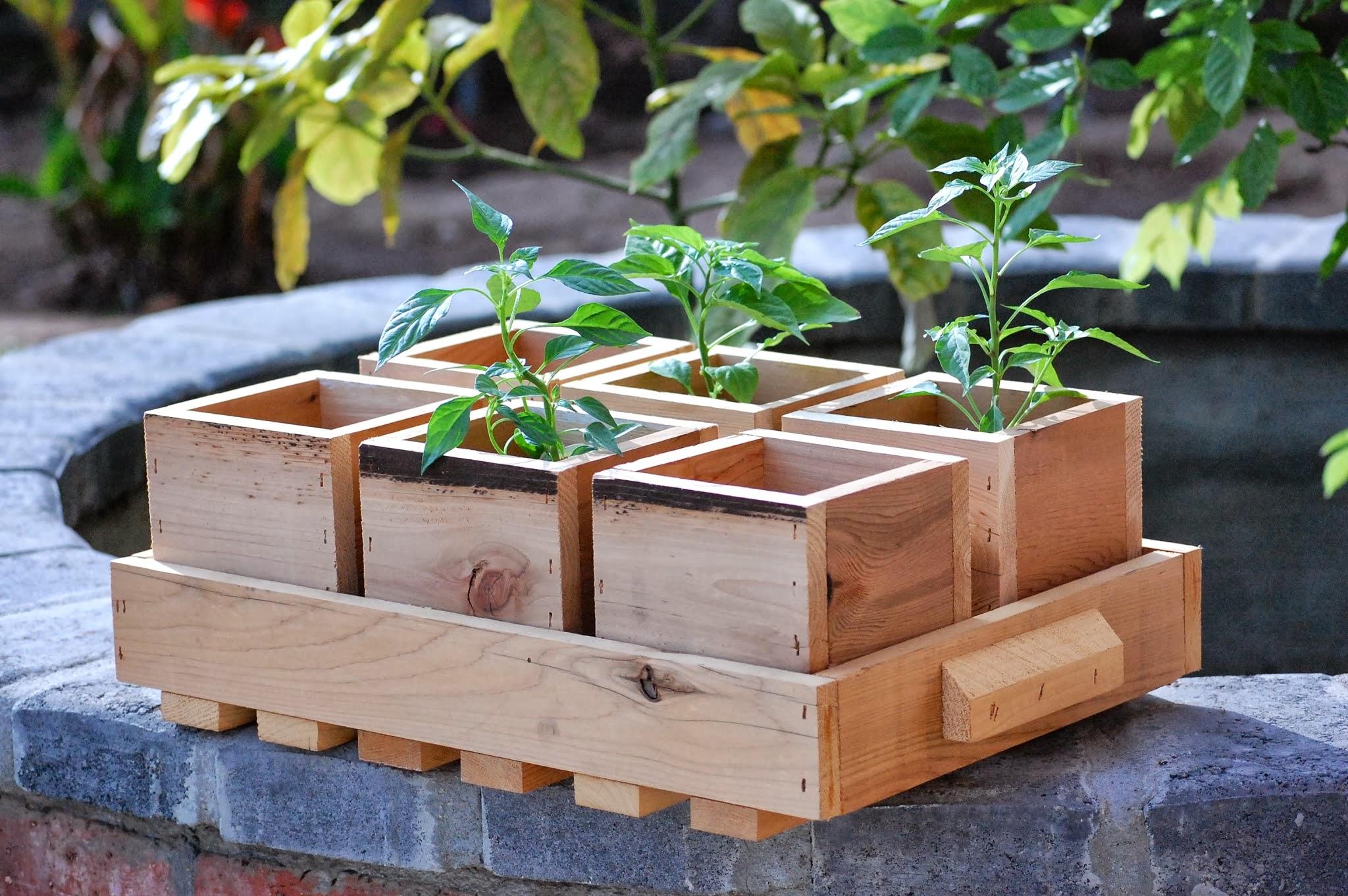 деревянный ящик для рассады перцев