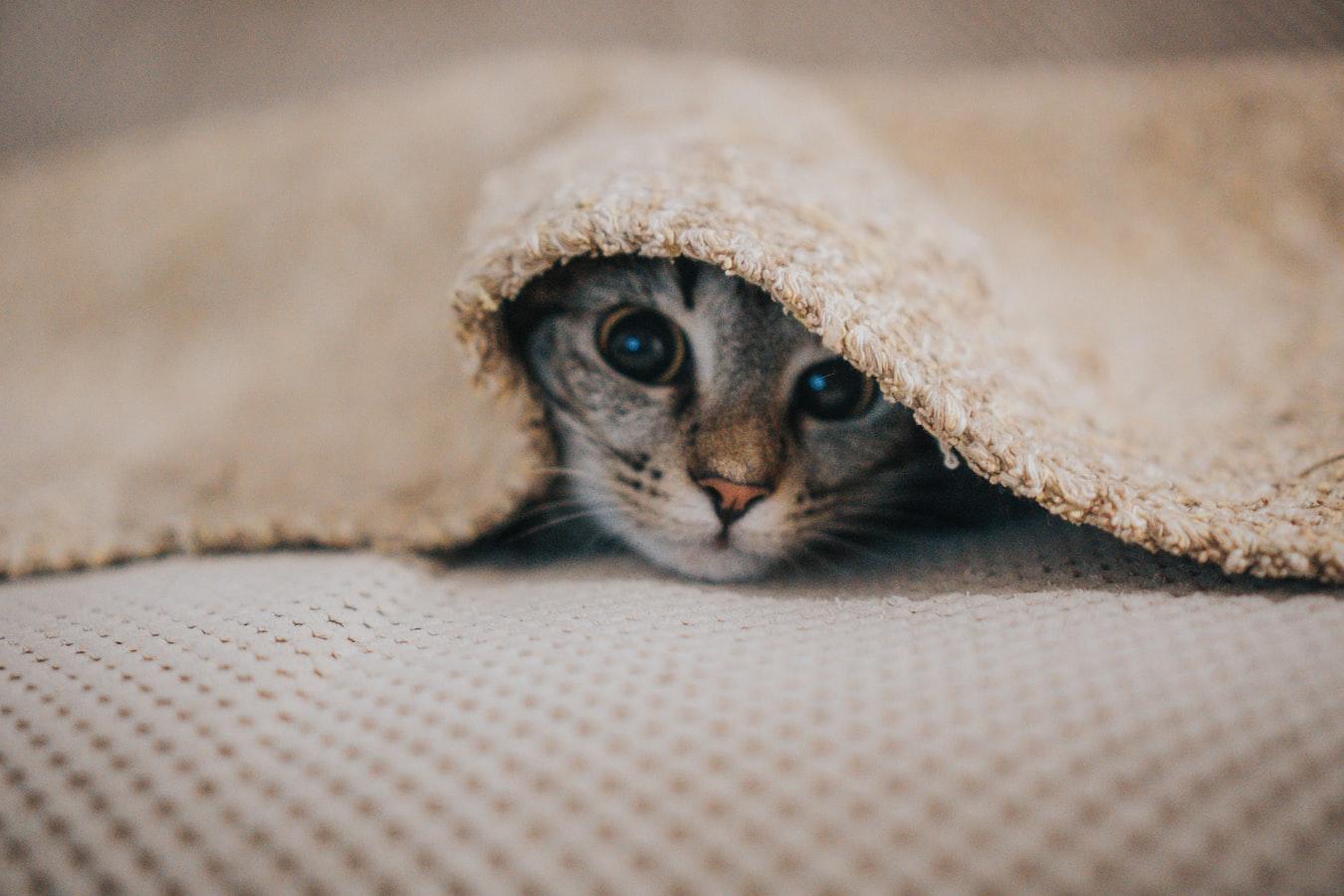 К чему снятся котята