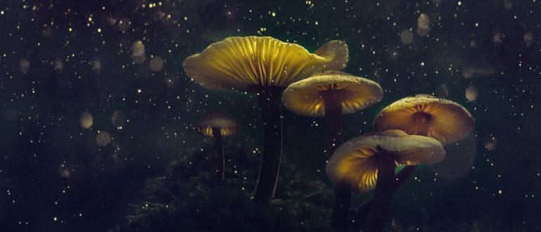 к чему снится гриб